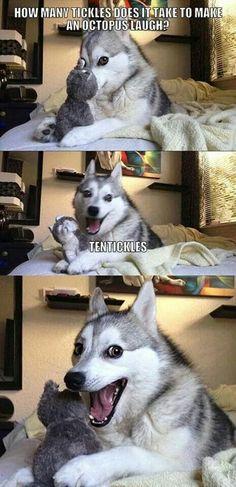 Happiest dog joke