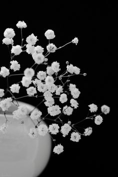 White Babies Breath on black.  #bw #blackandwhite #photography