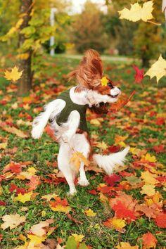Mom, it's Fall—yippee