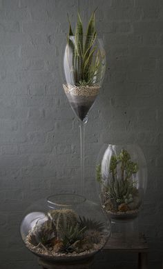 Another inspiratoin - different heights! Desert Terrarium Grouping 2 | Flickr - Photo Sharing!