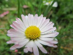 <3 daisy <3