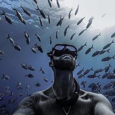 Sometimes just a bit of time back amongst your best mates is all you need to sort your head out. Underwater Life, Underwater Photos, Underwater Photography, Scuba Diving Gear, Padi Diving, Liquid Dreams, Deep Photos, The Shape Of Water, Deep Diving