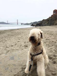 Kailee at Baker Beach.
