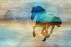 Horse by Pamela Williams | Fine Art Photographer - Kansas City
