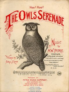 Owls Serenade