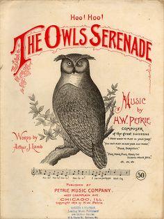 the owls serenade..  1894