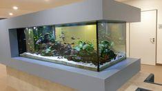 Cichlid Aquarium, Aquarium Aquascape, Home Aquarium, Saltwater Aquarium, Aquarium Fish Tank, Fish Tank Table, Fish Tank Stand, Koi Pond Design, Fish Tank Design