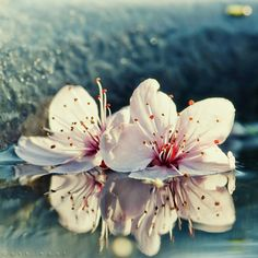 Blossoms, by Oer-Wout via beautiful life