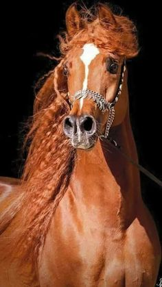 beauty#animal#horse
