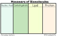 Our new GIF shows the monomers (building blocks) of biomolecules! Our monomers are cute, but be sure to look up their awesome chemical structure! #AmoebaGIFs http://www.amoebasisters.com/amoebagifs.html