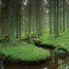 bluepueblo: River Forest, Västmanland, Sweden, photo via sherri