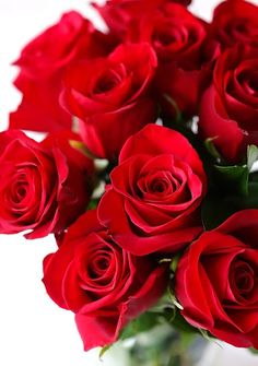 When Gisella arrives at the car Jacques not only has one rose but an entire bouquet! Gisella blushes at his romantic gesture! Beautiful Red Roses, Romantic Roses, Beautiful Dream, Beautiful Things, Bouquet Saint Valentin, Edible Roses, Rose Cake, Rose Cottage, Be My Valentine