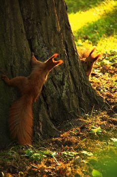 #Owl Island ... #forest #woods #squirrels