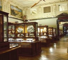 Some of the rather gorgeous display cases in the @nhmwien in the first floor. After minerals into fossils and coming up to dinosaurs. The museum is open late on Wednesdays until 9pm and its perfectly possible to get some of the huge rooms all to yourself.  #museum #dinosaur #fossils #Vienna #Wien #Austria #naturhistorischesmuseum #naturalhistory #museum #museumstudies #emptymuseum #InstaMuseum #igersaustria #igersvienna