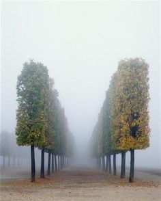 Autumn in Versailles, France ...