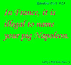 I am moving to France and getting a pig. Breakin' the law! Breakin' the law!