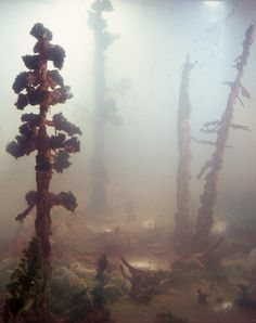 Underwater fish tank art by Kim Keever // #art #installation #photography