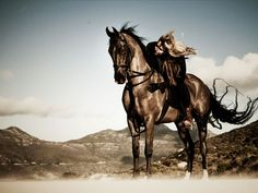 Cavalli Estate's American Saddlebred, Black Tie, looks absolutely arabesque against a breathtaking South African backdrop.
