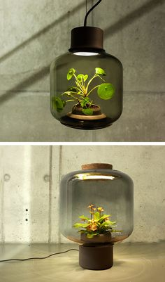 How To Feng Shui Your Home for Better Balance These lamps were designed to grow plants in windowless spaces Kitchen Lighting Design, Kitchen Lighting Fixtures, Indoor Garden, Indoor Plants, Mini Mundo, Blitz Design, How To Feng Shui Your Home, Color Of The Year 2017, Licht Box