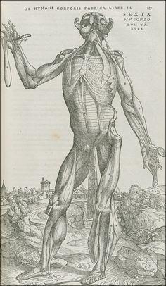De Humani Corporis Fabrica...    Basel, 1543. Woodcut. National Library of Medicine.    Andreas Vesalius  (1514-1564)  [anatomist]    Stephen van Calcar and the Workshop of Titian  [artists]