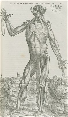 De Humani Corporis Fabrica...    Basel, 1543. Woodcut. National Library of Medicine.    Andreas Vesalius  (1514-1564)  [anatomist]    Stephen van Calcar and the Workshop of Titian  [artists]    Anatomical representation makes the insides of our bodies visible and familiar, but also reveals a strangeness, an otherness. In dramatizing the dissected body, Vesalius contributed to a new visual iconography of monstrosity.