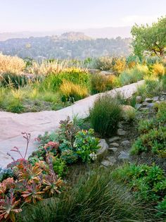 Dry creeks lined with rocks and pebbles direct the water downslope and away from the house. Succulents and grasses flank this one.