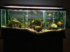 Cichlid aquarium with live plants.