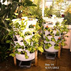 Good The Garden Tower Grows Plants Vertically, Enabling You To Grow 50 Plants In  A Very · 55 Gallon DrumEnablingVertical ...