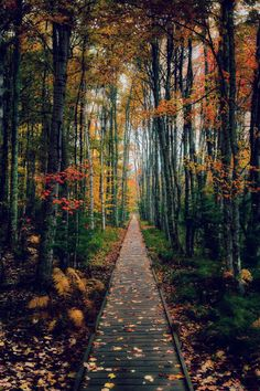 accras:  disminucion:  A walk in the woods, Michael Steighner | Website  Would never leave