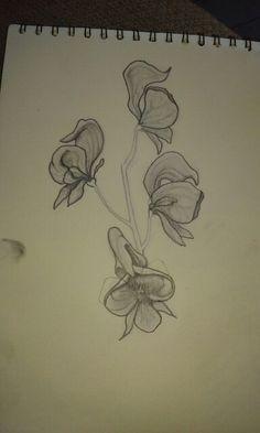 Wolfsbane flower charcoal pencil sketch