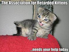 a retardedly cute kitten