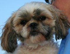 Harley the Mill Dog and National Mill Dog Rescue team up to save puppy mill dogs from auctions