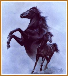 BLACK STALLION:::The Story of a Boy:::Alec encounters a magnificent black Arabian horse while traveling aboard a steamship around the coast of North African with his father. When a disaster destroy the ship. Alec frees the horse and escapes with it to a near by Island, where they form a close bond with the Black Stallion......BEAUTY AND WONDER OF NATURE THE BLACK STALLION.....