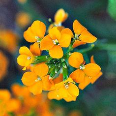 Best Early Spring Flowers for the Pacific Northwest