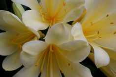 a Lily for your Send a today - www. Flowers For You, Wonderful Picture, Flower Pictures, Lily, Plants, Photos Of Flowers, Plant, Lilies, Planting