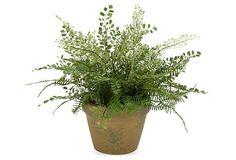 "19"" Various Ferns in Pot, Faux on OneKingsLane.com"