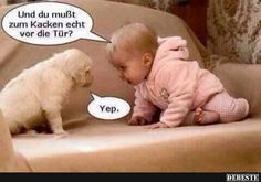- Welcome to our website, We hope you are satisfied with the content we offer. Animal Jokes, Funny Animals, Cute Animals, Tierischer Humor, Man Humor, Funny Babies, Funny Dogs, Image Facebook, Haha