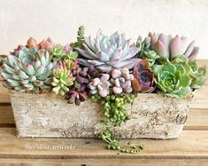Live Succulents in a Rectangular, Birch Trimmed, Wooden Planter. Table Decor, Holiday Gift, Hostess Gift Succulent Arrangement Live Succulents in a Rectangular Birch Bouquet Succulent, Succulent Planter Diy, Succulent Landscaping, Succulent Gifts, Succulent Centerpieces, Hanging Succulents, Succulents In Containers, Faux Succulents, Succulent Arrangements