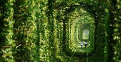Il tunnel dell'amore nato dall'interazione di uomo e natura - Kleven Ucraina