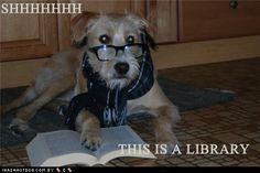 The cutest librarian around!   Google Image Result for http://ihasahotdog.files.wordpress.com/2011/07/funny-dog-pictures-this-is-a-library.jpg