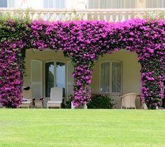 Hotel du Cap Eden Roc - Antibes Provence, Antibes France, Porch Entry, Juan Les Pins, Hotel Services, Unique Hotels, Bougainvillea, Grand Entrance, Farm Gardens