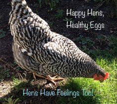 Happy Hens, Healthy Eggs: site promoting free-range eggs instead of factory eggs.