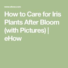 How to Care for Iris Plants After Bloom (with Pictures)   eHow