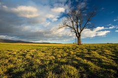 Lonely tree without leaves on the autumn field Detailed Image, Lonely, Vineyard, Leaves, Autumn, Nature, Photography, Outdoor, Outdoors