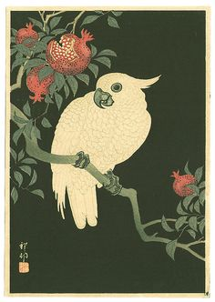 Ohara Koson: Cocatoo on Pomegranate (Muller Collection) - Ca. 1930s