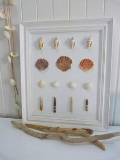 Seashells in frames. I have tons of both.