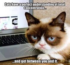 The Official Grumpy Cat Grumpy Cat Quotes, Grumpy Cat Humor, Cat Memes, Grumpy Kitty, Crazy Cat Lady, Crazy Cats, Angry Cat, Bad Cats, All About Cats