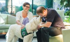 Sit, stay and heal: Therapy dogs help soothe cancer patients