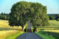 Country Road, Loire, France photo by timmillar.illusion to me that the road just road seems to split the tree and goes right through the middle.Country Road, Loire, France /photo by timmillar Beautiful World, Beautiful Places, Amazing Places, Belle France, Tree Tunnel, France Photos, Pathways, Land Scape, Places To See