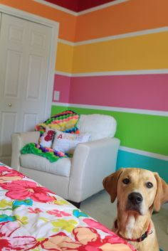 Teen room re-do!  Love these colors! might be cool on the door in the rainbow bedroom
